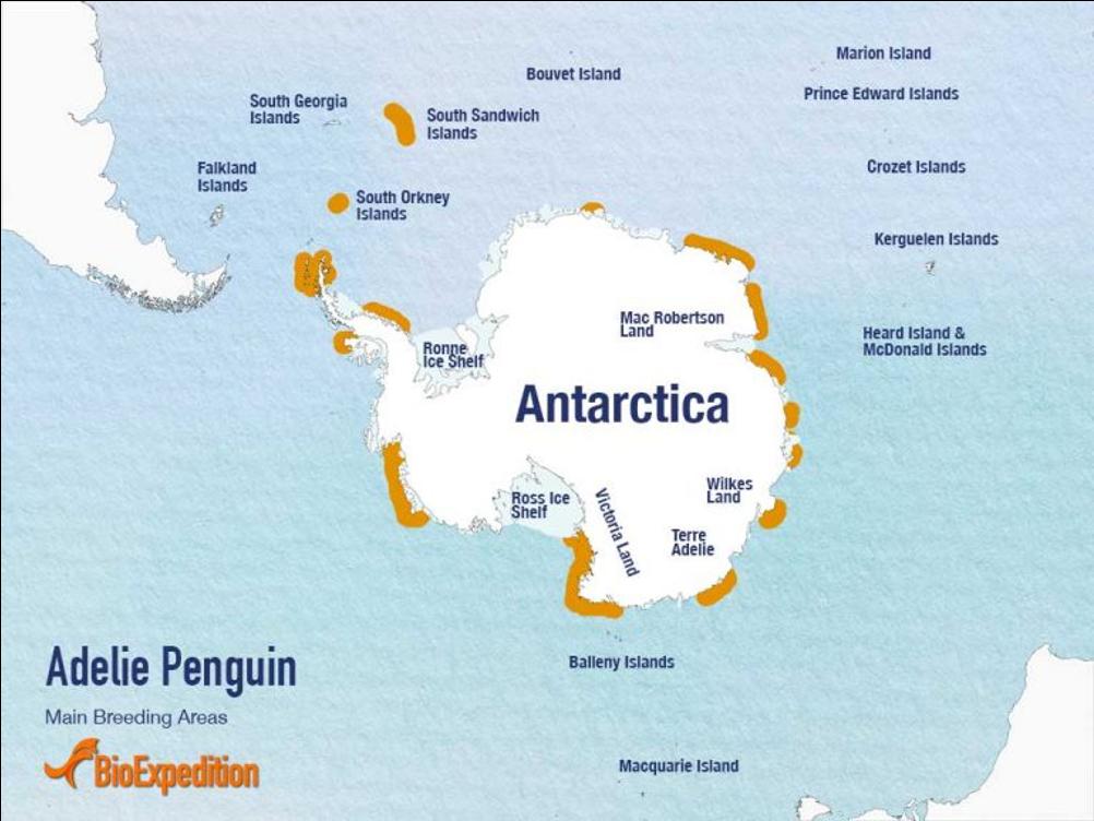 阿德利企鹅分布地区