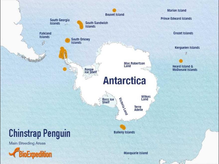 帽带企鹅的分布区域