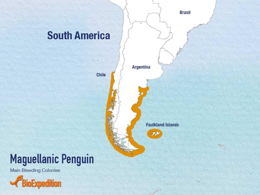 麦哲伦企鹅繁殖聚居地区