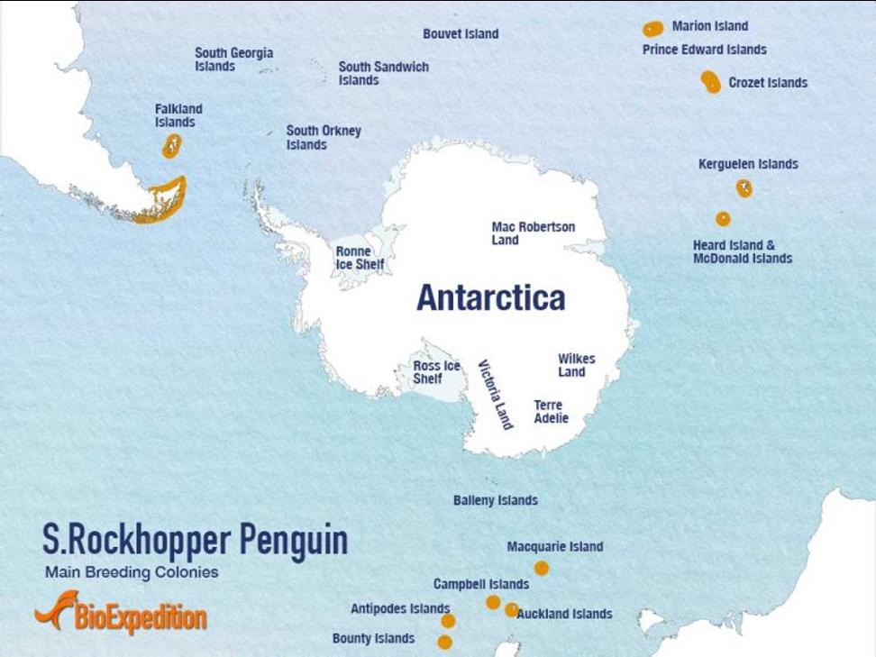 跳岩企鹅分布地区