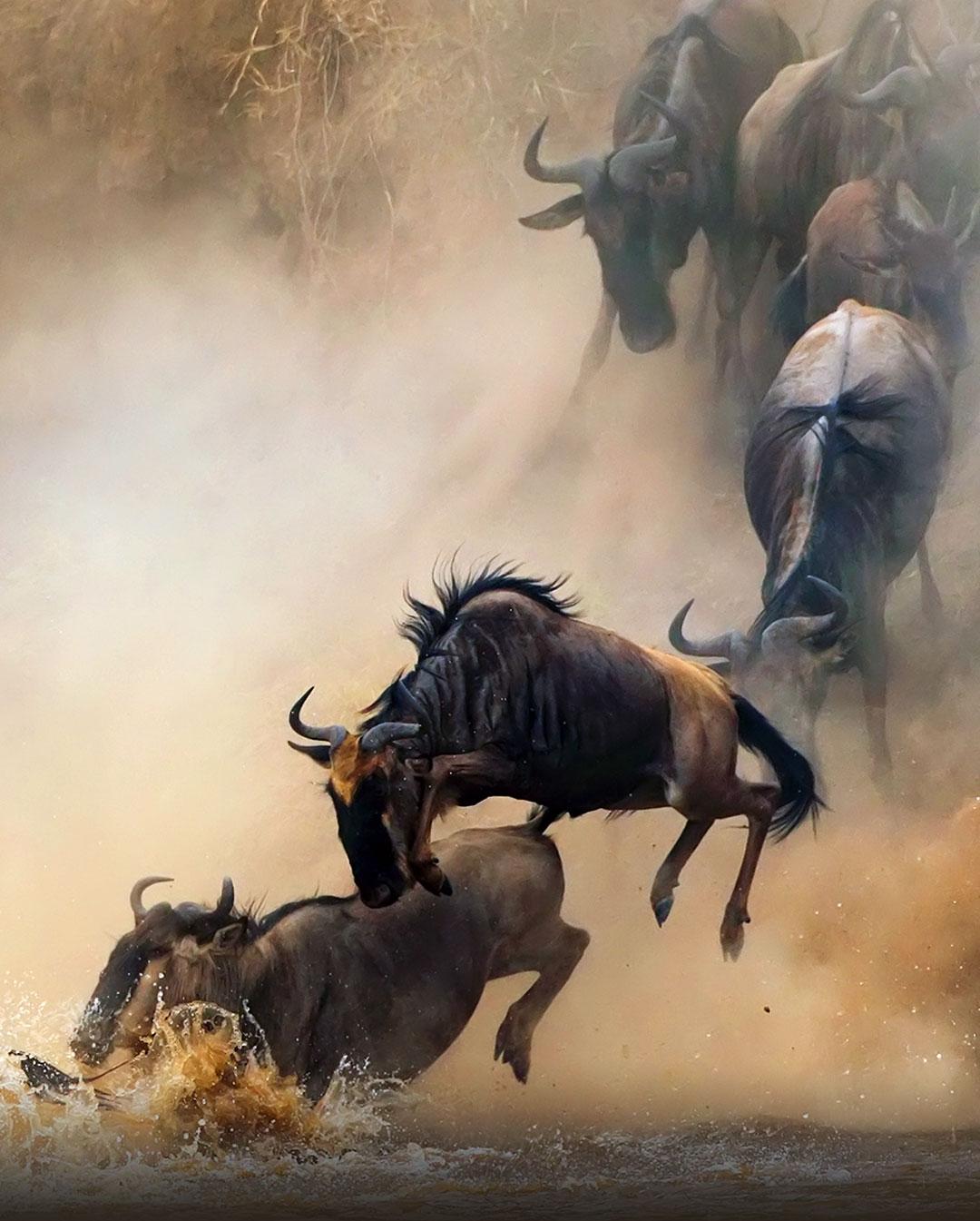 肯尼亚游猎