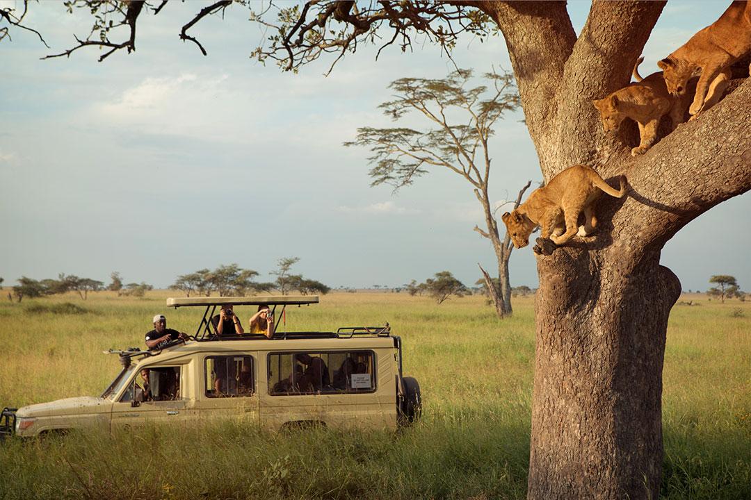 专业越野车游猎非洲