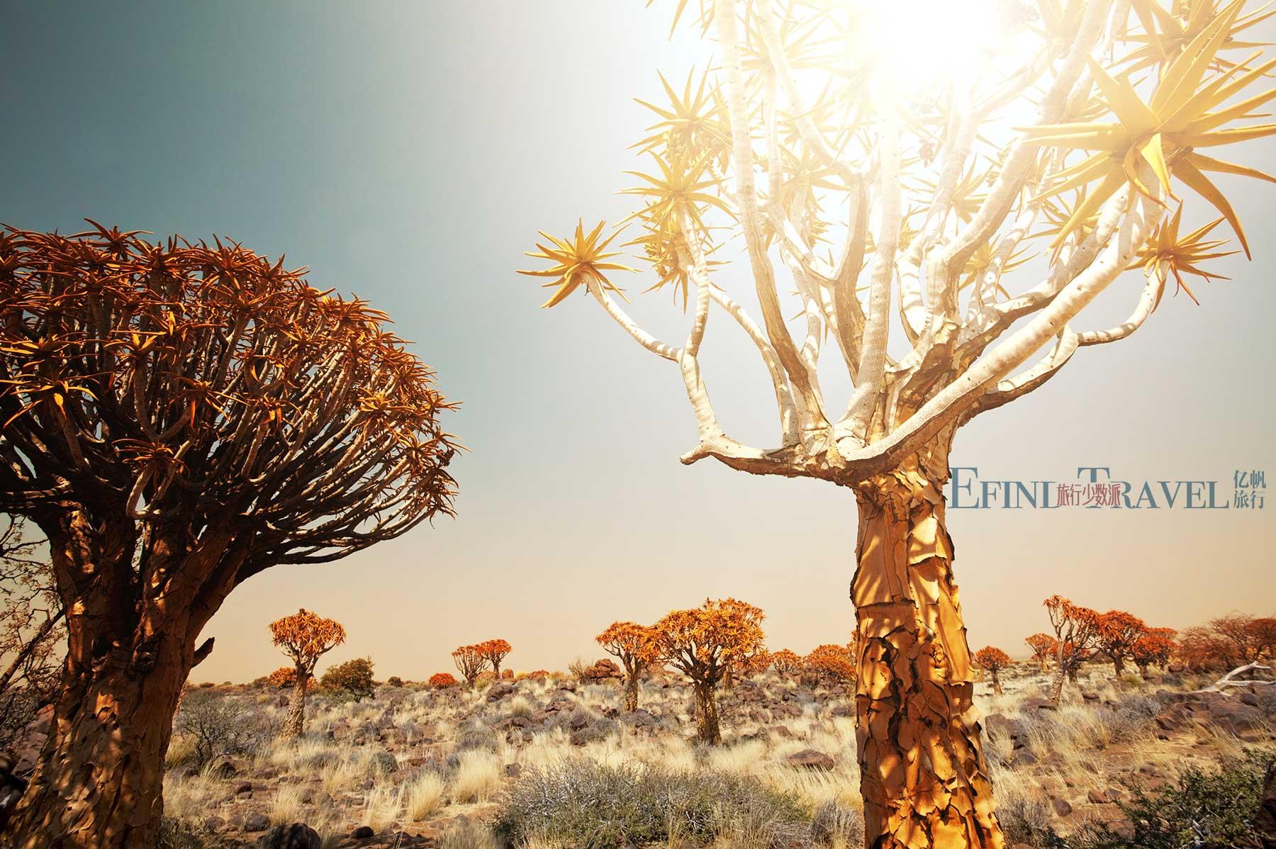 纳米比亚箭袋树庄园
