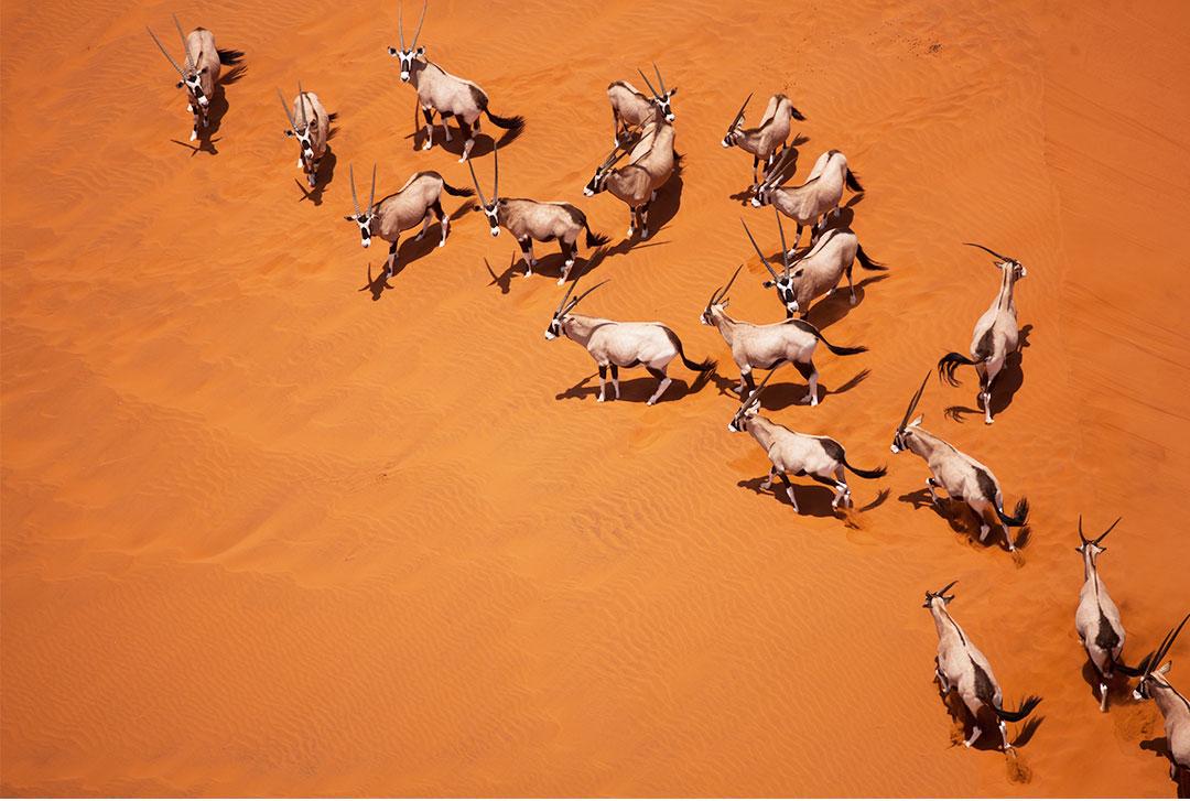 纳米比亚红沙漠