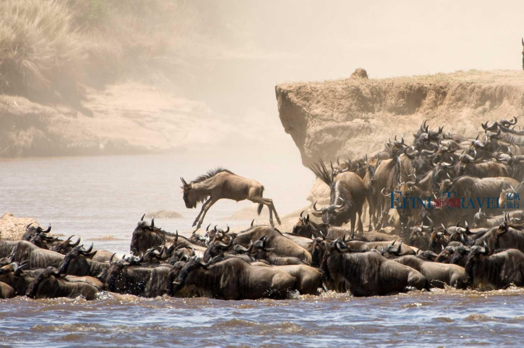 塞伦盖蒂东非动物大迁徙