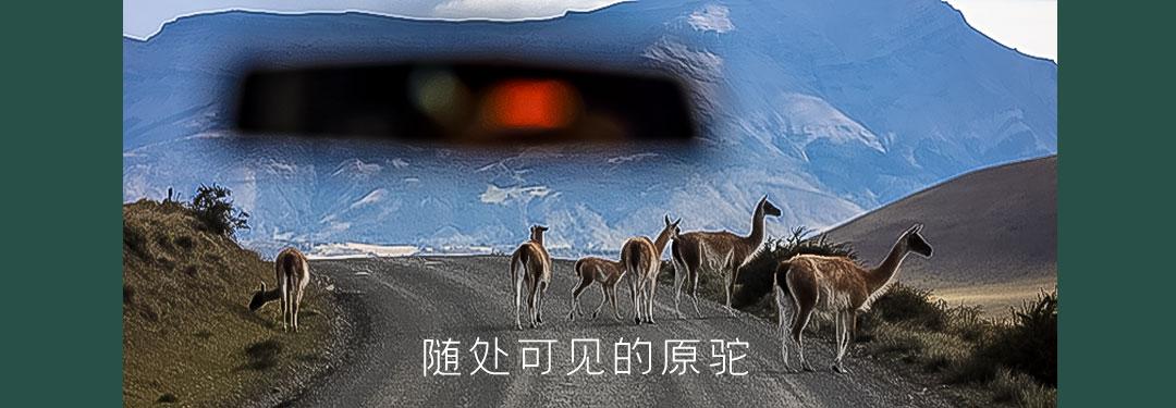 巴塔哥尼亚驼羊